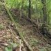 Die von mir gewählte Aufstiegsroute entlang des umgestürzten Baumes.