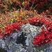 Schöne Herbst-Dekoration!