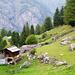 Schafweide am Waldrand