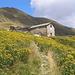 fioriture all'alpe Albano