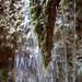 Bärtiger Wasserfall