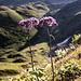 Zusammen mit den verbliebenen Grasflächen ist die blühende Flora ...