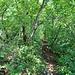 Dann wieder leichtere Passagen, wo der Grat in Folge der Erosion fast oder ganz im Boden verschwindet.