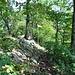 Der Wegweiser auf ca. 725 m ü. M., bei dem man hinunter zum Buessberg abbiegen kann (Ausstiegsmöglichkeit).