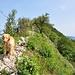 Auch Hunde schaffen den Lägerngrat, wenn sie bergsteigerisch geschickt sind :-)<br />Hier meine Laufpartnerin, ein Hovawart - im Moment der Aufnahme in umgekehrter Laufrichtung ;-) -, kurz vor der T4-Stelle zwischen Buessberg-Abzweigung und Wettinger Horn.