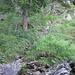 Der steile Auftieg im Chäserenwald.