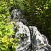 oft fehlt es an Exponiertheit, weil man auf Höhe der umliegenden Bäume über den Felsgrat geht