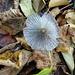 ein Pilz