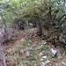 La cresta si trova nel bosco fino a quasi Q1300