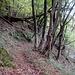 Sentiero che scende a Caslino
