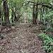 Il tratto iniziale del sentiero nel bosco.