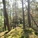 Etwas seitlich am Hang des Hahnbergs liegt der Bänderfels, den ich hier von der  Bergseite aus gleich erreiche.