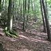Der obere Bereich des Kumbfelsens ist nur weglos zu erreichen, aber auf gut begehbarem Waldboden.