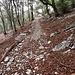 Il sentiero che da Bellavista scende a Somazzo.