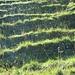 Licht und Schattenspiel auf den Grasmatten