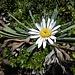 ... und weiteren schönen Blumen