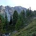 Abstieg nach Vorsass über Heidelbeerfelder