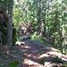 Im Wald das nicht mehr benutzte Bachbett der Bisse d'Ayent