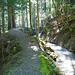 Romantische Stellen im Wald