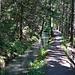 Zum Abschluss gemütliches Wandern auf komfortabel breitem Hüterweg