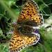 Viele Schmetterlinge genossen den heutigen Tag ebenfalls