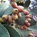 ficoindia,frutto locale presente in tutta l'isola.