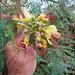 bellezza floreale 2
