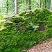 Einer der vielen Findlinge im Grauholzwald