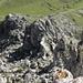Felsköpfe im Gipfelbereich