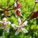 Hübsche, winzig kleine Blüten