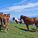 Glückliche Pferde