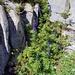 Blauer Eisenhut (glaube ich jedenfalls...)
