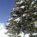 Ein natürlicher Weihnachtsbaum