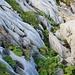 Beim weglosen Abstecher vom Bergweg zum Nollen (2026m) von der Melchsee-Futt (1902m) auf den Bonistock (2168,6m) muss man stets aufpassen, wegen den teilweise überwachsenen Karstfelder hats überall Stolperfallen.