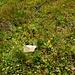 Blumenoase am Fusse des Namenlosen