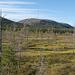 """Moorgebiet names """"Tunturiaapa"""" (Berg-Moor). Aussicht vom Vogelbeobachtungsturm."""