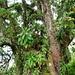 cet arbre a plus de 400 ans!