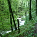 Der Tobelbach hat ordentlich Wasser