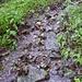Hier habe ich gezögert und überlegt, ist das hier der Wanderweg oder ein Bach? Es hat sich schliesslich herausgestellt, dass das der Wanderweg ist, obwohl es auf den ersten Blick nicht danach aussieht.