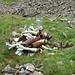 Am Fusse der Girenspitz liegen noch einige alte Raketen. Ist da deswegen soviel Steinbruch?