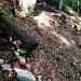 menschlicher Pfad (man beachte den abgesägten Baum)