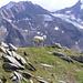 Määää ;) wären die Berge im Hintergrund nicht, könnte man fast von schottischer Atmossphäre sprechen
