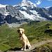 Kleiner Hund vor großem Berg - Flat Finnley ist immer mit Spass dabei.