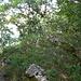 Am höchsten Punkt der Lägern: P. 866 - unscheinbar...