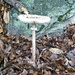 Pilz am Aufstieg zum Rifugio Scenghio di vacche