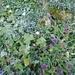 1.9.2010 beim Einstieg zum Ischpfad, -boden gefroren und es wird Herbst, Silberdistel