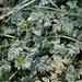 1. Frost liegt auf den Pflanzen
