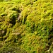Alle Farbnuancen von Grün waren in dieser moosigen Felswand zu erkennen.