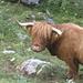 Nach dem Füdli-Grüselä folgten tierische Begegnungen zottlicher und...