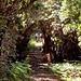 Salendo tra erica arborea e corbezzoli